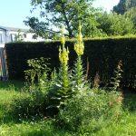 Projekt Außenanlage / Grünstreifen