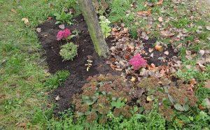 So oder so, zum Ende des Jahres wurden in die meisten Baumscheiben neue Pflanzen gesetzt und mit guter Erde ergänzt.